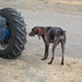 """""""What a lot of tire to pee on."""" by Molly at Doggy Lama Pet Care"""