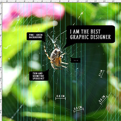 The Spider Designer