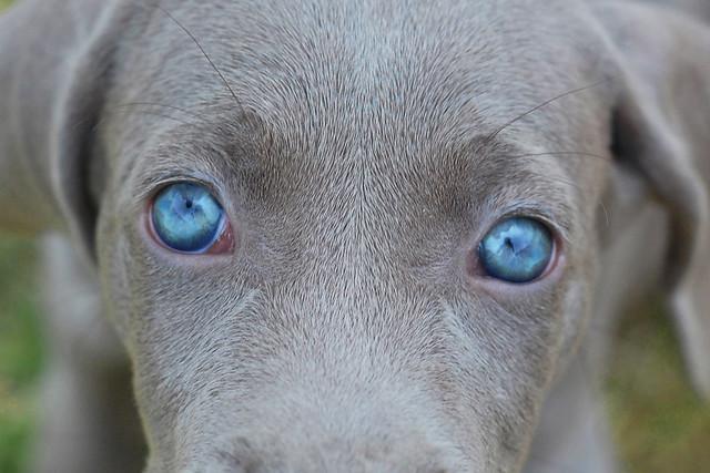 Lucys Eyes