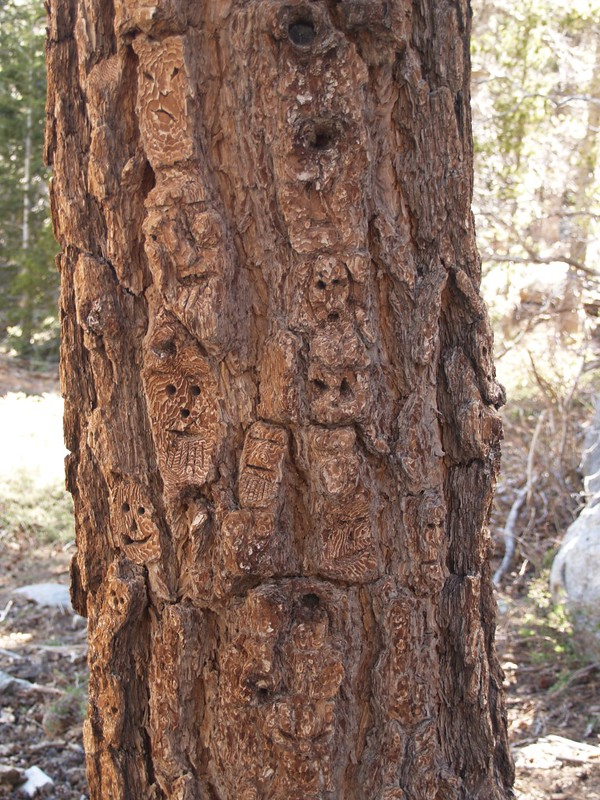 This tree has many, many faces carved in it. Technically, this tree was defaced. (pun)