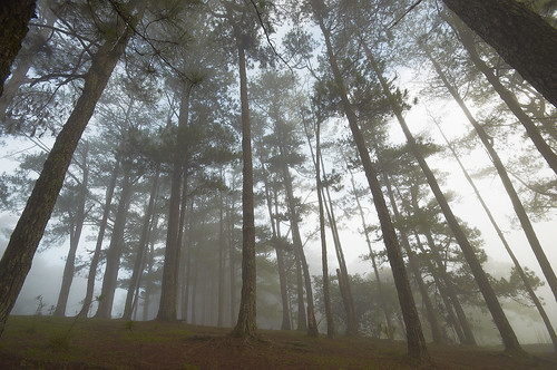pine clouds philippines foggy earlymorning wideangle lookingup baguio lowcloud campjohnhay lowvisibility