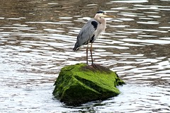 Mossy rock bird