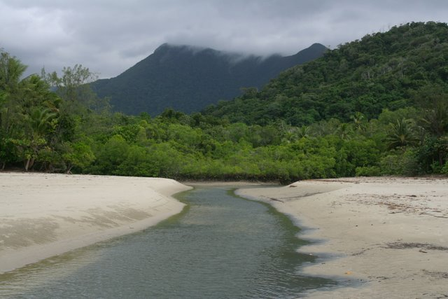 Selva tropical de Daintree, Queensland, Australia