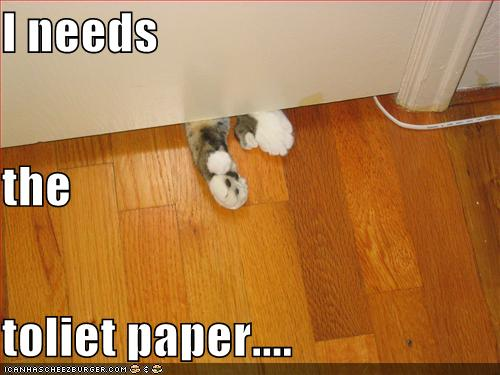 funny-pictures-cat-needs-toilet-paper