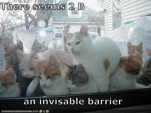 funny-pictures-invisible-cat-barrier