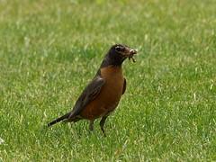 my friend, Robin