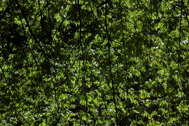 Abstract canopy