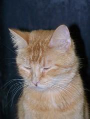 kitten upper respiratory infection