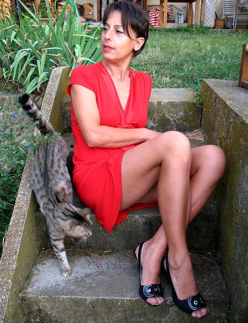 Curiosità di gatto