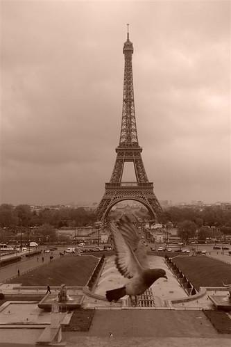 viajar entre Inglaterra y Francia: Torre Eiffel, símbolo de París y Francia viajar entre inglaterra y francia - 2668510393 a7845f1c1e - Cómo viajar entre Inglaterra y Francia