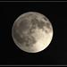 Luna Llena del Venado by msegarra-mso