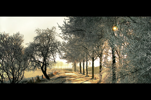 Winter wonderland (HDR)