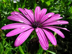annual plant, flower, purple, plant, daisy, macro photography, wildflower, flora, close-up, plant stem, pink, petal,