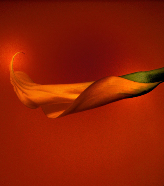 Il sole svanito nel mistero arrotolato in sé - Le soleil évanoui dans le mystère enroulé en soi (Viviane Ciampi)
