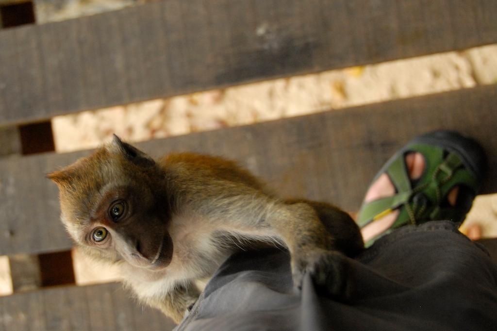Monkey_Attack_11