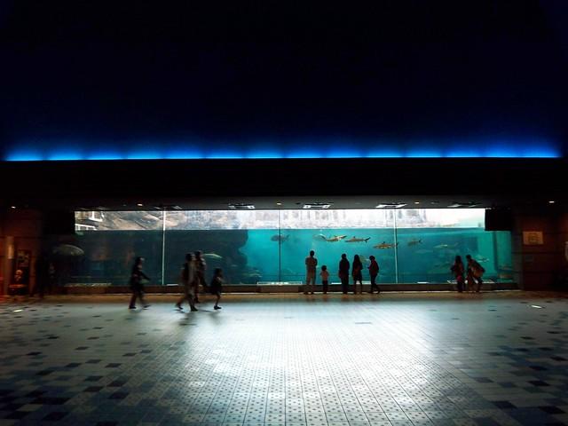 suma aquarium