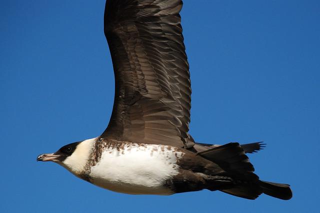 2645612552 70cef364e3 z jpgTundra Birds