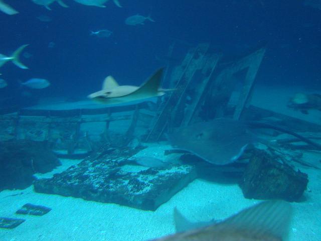 2008 03 16 Camden 032 New Jersey State Aquarium Flickr