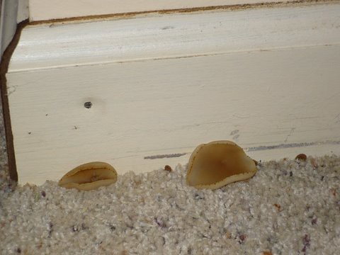 how to stop fungus growing in house