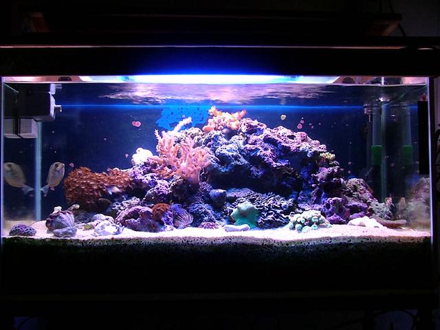 29 gallon mini reef aquarium Flickr - Photo Sharing!