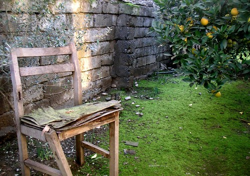 wood morning light food orange tree green broken grass stone wall fruit yard geotagged chair seat leg rustic poetic vision sit mazandaran multimegashot shirdar daarklands
