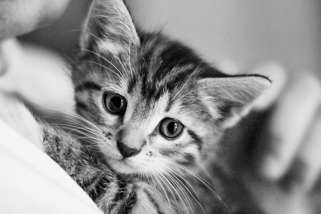 Kittens, kittens (explored)
