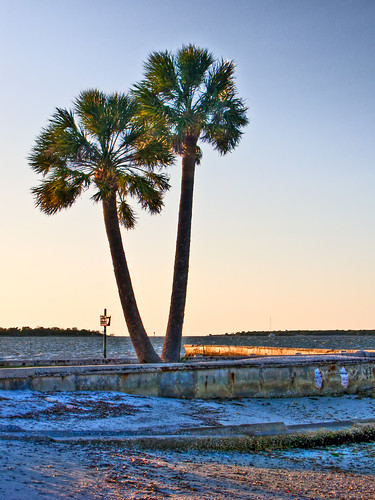 tree beach river bay palm sunsetboatdockmanateeriverriverwaterbradentonflusa