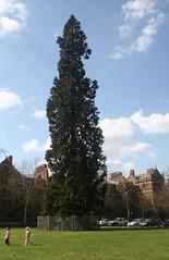 little girls big tree