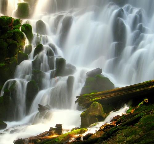 green rock oregon flow moss log wilderness