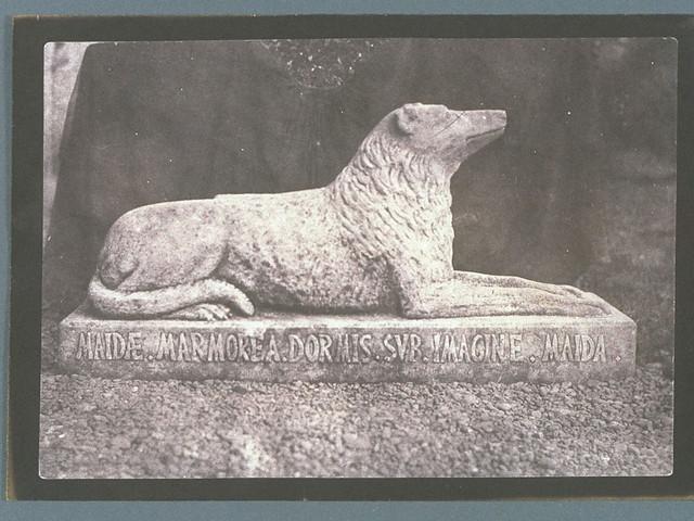 Sir Walter Scott's Favourite Dog, Maida