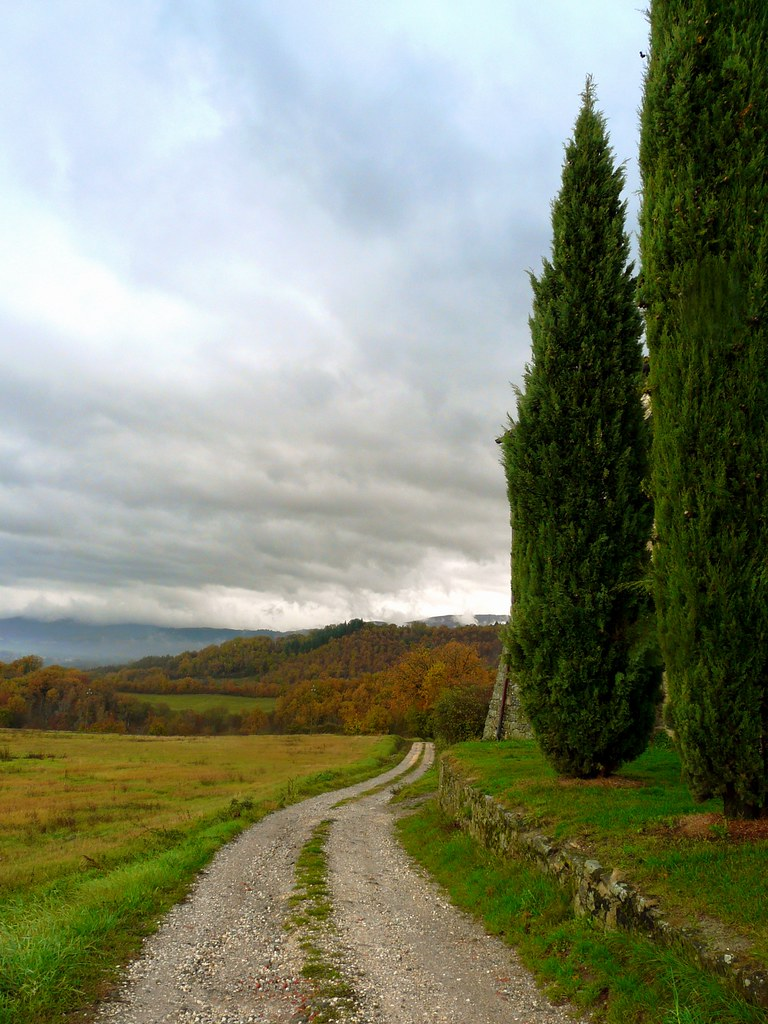 Path and cypresses