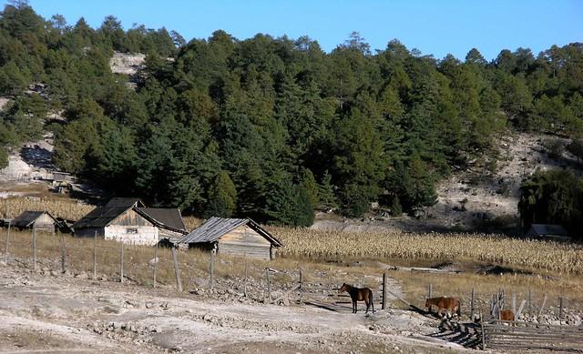 Copper Canyon Homes For Sale Surprise Az