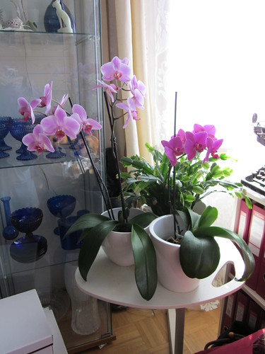 Kukkia kotona by Anna Amnell