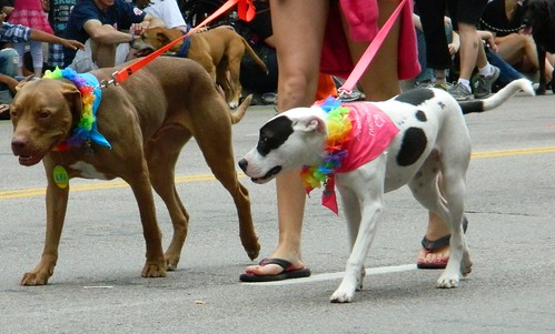 Minnesota Twin Cities Pride June 2011 – Doggies