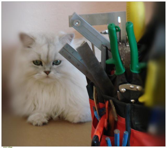 home repairs cat