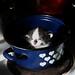 die böse Stiefmutter kocht aus kleinen Kätzchen ein leckeres Süppchen