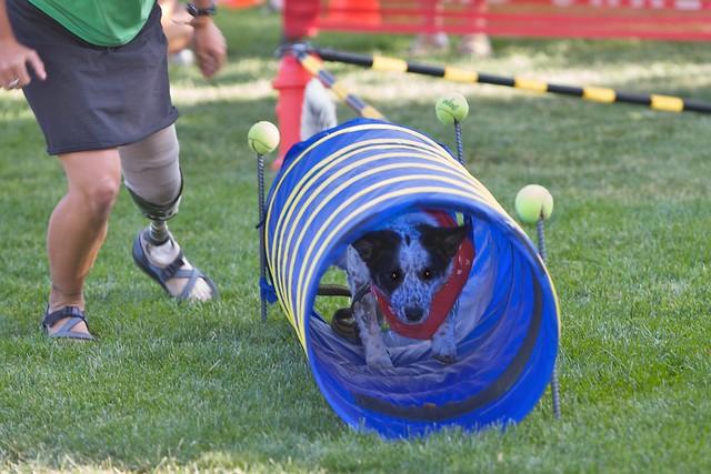 Ogden Utah Dog Boarding