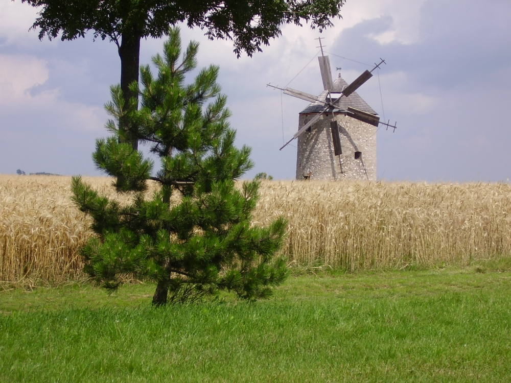 A tési szélmalom /  The windmill of Tés