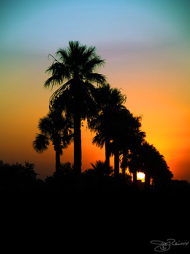 sunset sanantonio texas olympus explore palmtrees e510 zd 1454mm october12008 madeitto291