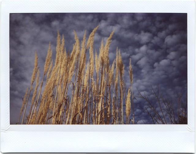 Wheat Sky - Instax Photo