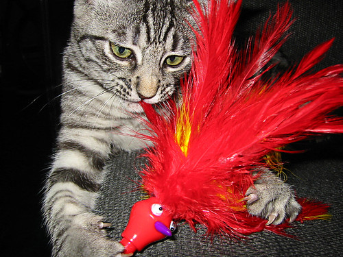 Cat and Red Haired Toy