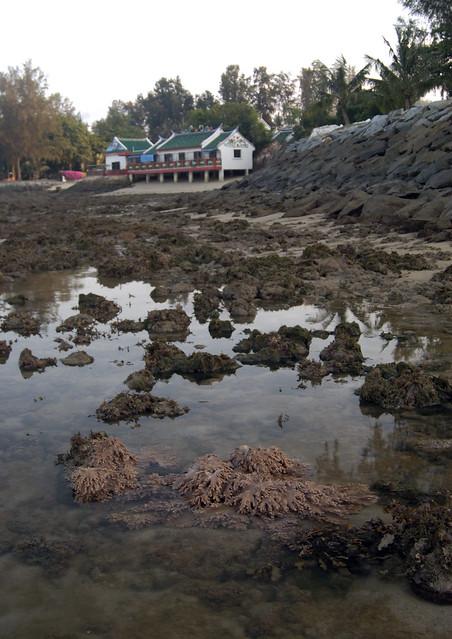 Kusu Island: Living shores