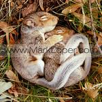 www.markloper.com