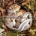 www.markloper.com by www.MarkLoper.com