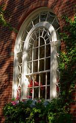 "Boston - Beacon Hill ""Window Dressing"""