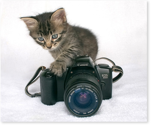 My little assistant...almost a photographer!
