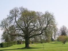 Templemore Golf Club