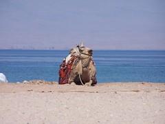 Taba, Egypt