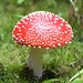 fungi and lichens - Photo (c) Harry Harms, some rights reserved (CC BY-NC-SA)