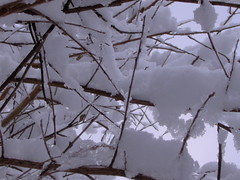 tree(0.0), ice(0.0), winter storm(0.0), branch(1.0), winter(1.0), snow(1.0), rain and snow mixed(1.0), frost(1.0), blizzard(1.0), freezing(1.0), twig(1.0),